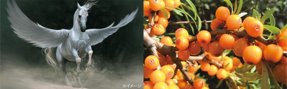サジーは、ギリシャ神話では、空飛ぶ白馬「ペガサス」の好物だったとも言い伝えられている